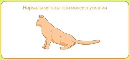 кот без мочекаменной болезни