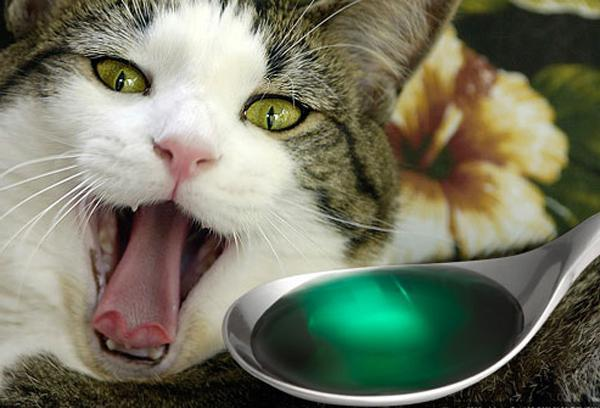 Мочекаменная болезнь у кошек лечение народными средствами