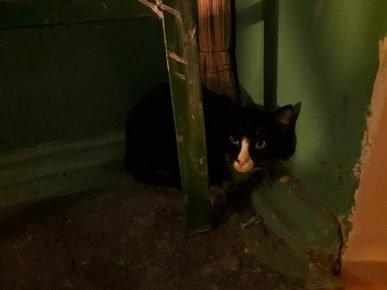Кот прячется в подъезде