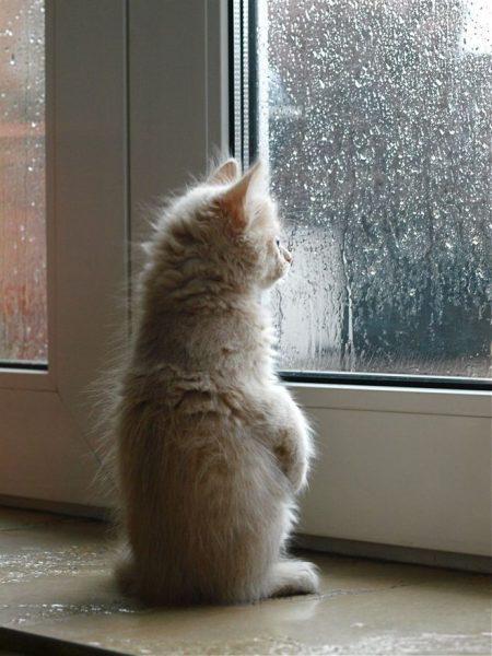 котёнок смотрит в окно