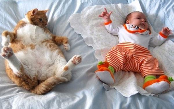 Коты способны имитировать детей