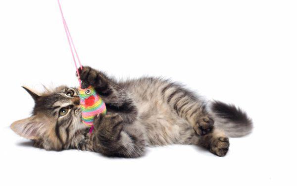 У котенка должно быть много игрушек