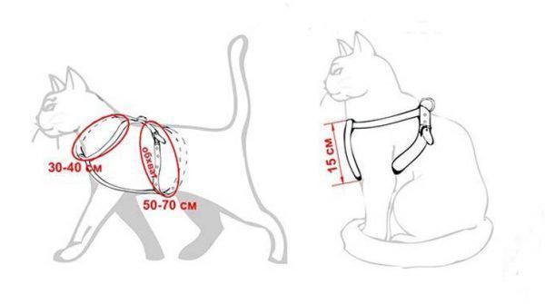 Размеры шлейки для кошки