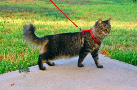 Кот на пргулке