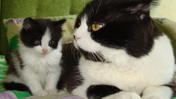 Скорости развития организма кота и организма человека имеют мало общего между собой