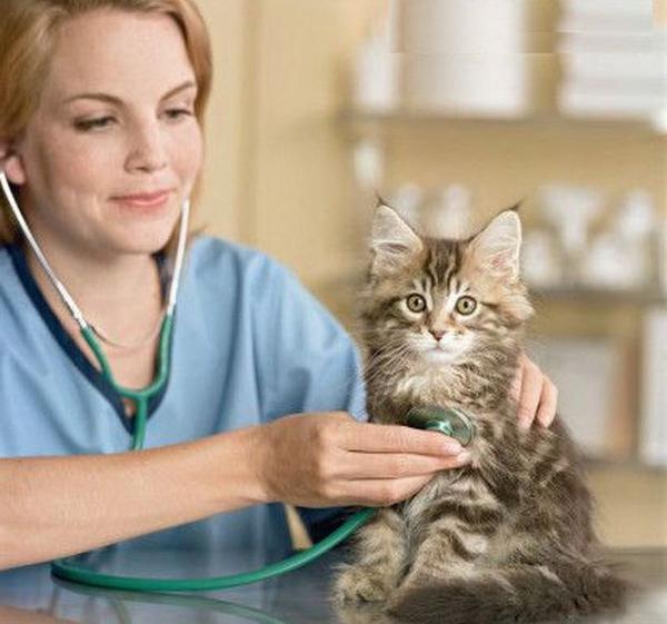 Каждому возрасту кота предполагается свой подход в выборе витаминных комплексов и лекарств
