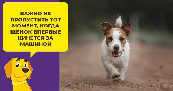 Почему собаки бегают за машинами: как отучить питомца от опасной привычки