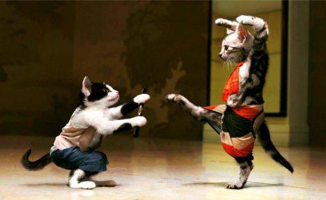 Котики кунг-фу