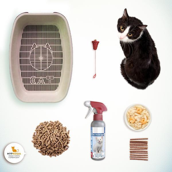 Действующий способ приучения взрослой кошки к лотку. Кот, Приют муркоша, Полезное, Помощь, Длиннопост