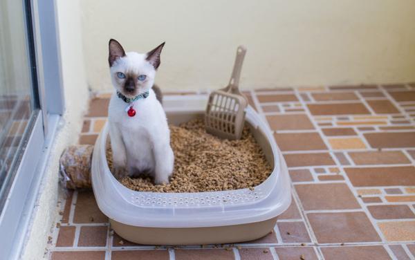 Котёнок в лотке