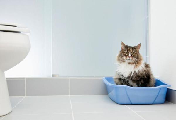 Кошка в углу туалета в лотке