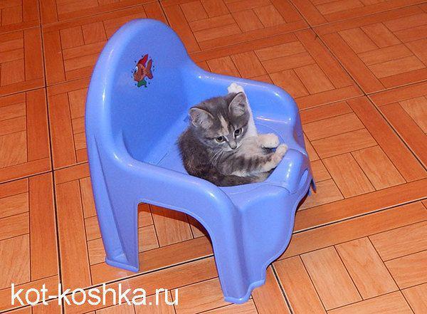 kak-priuchit-kota-k-lotku-03