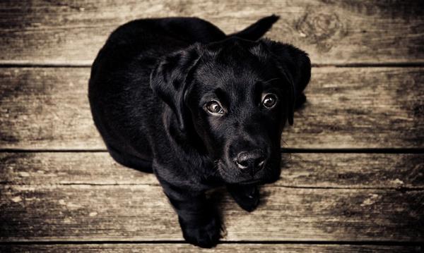 Приучить собаку к будке
