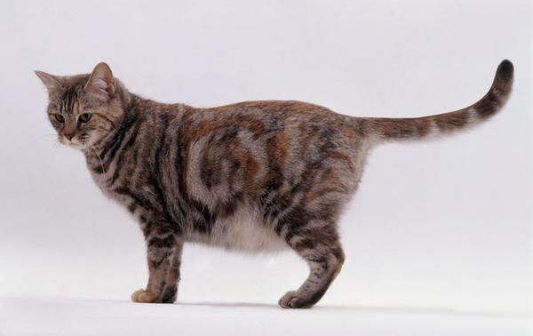 Беременных и кормящих кошек можно глистовать только по назначению врача