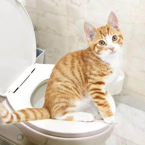 клизма коту
