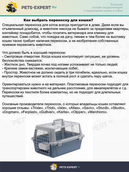 Каждый владелец кошки должен иметь сумку-переноску