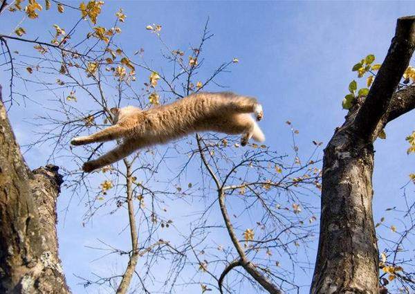 Кошка - летяга