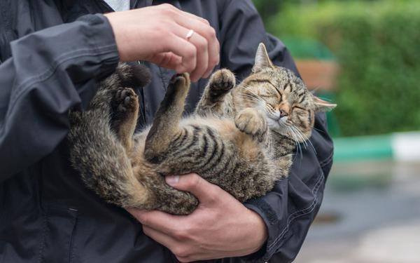 Кот спасён!