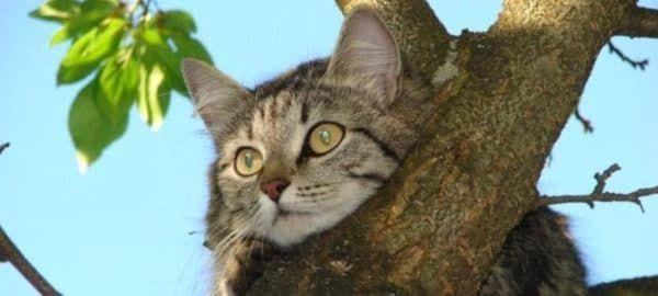 Как залезть на дерево за кошкой
