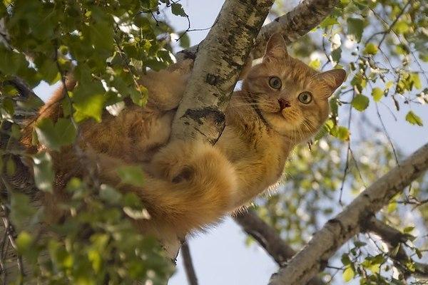С дерева весь двор виден, как на ладони