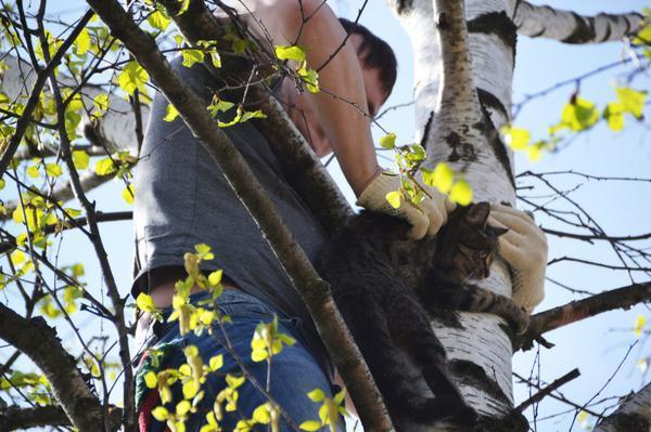 Схватив кота за холку, важно его не упустить