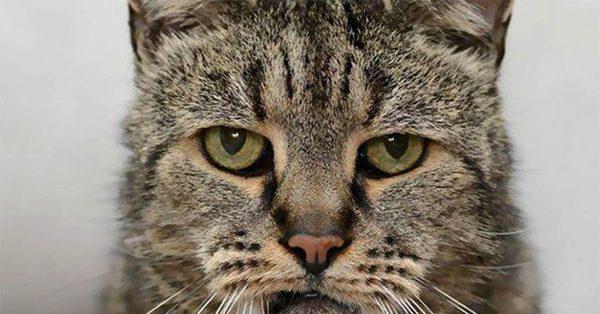 Как понять, что кот умирает — признаки и причины