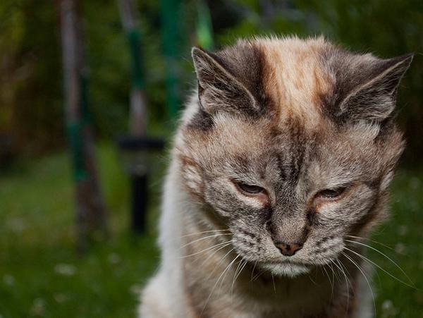 Кот постарел