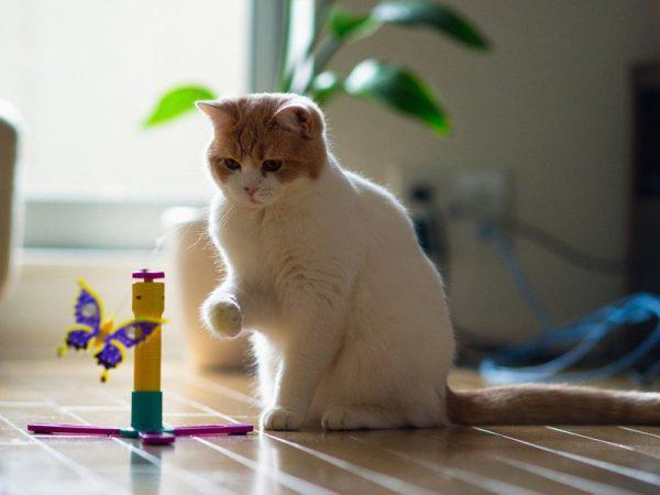 Кот играет с бабочкой на подставке