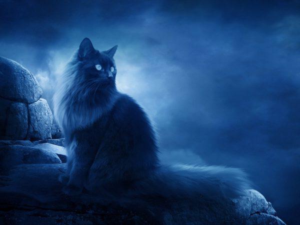 Черный кот сидит на фоне луны