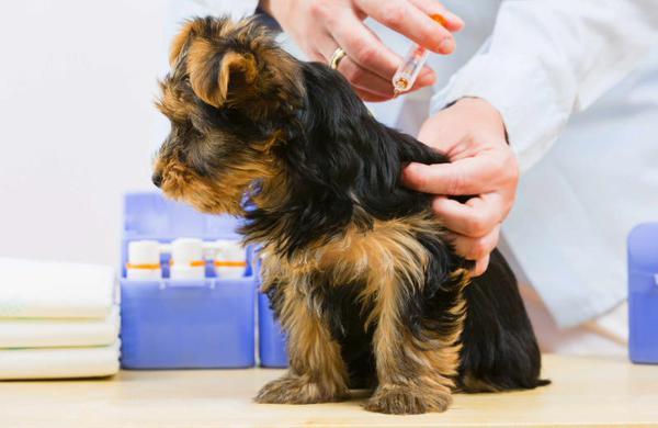 когда нужно делать прививку собаке