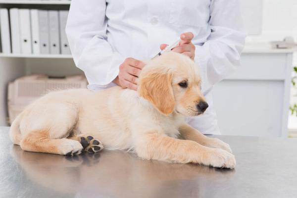 Прививки щенку