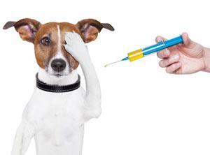 Прививки собакам по возраст