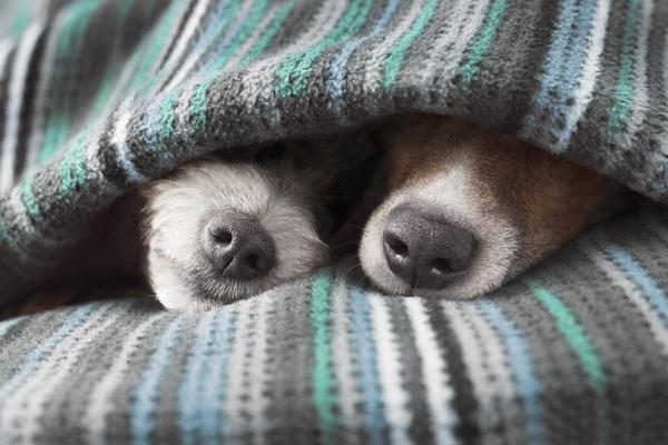 Нелюбовь к летучим органическим соединениям собаки разделяют с людьми
