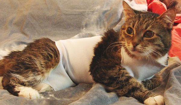 Операция по удалению рака молочных желез у кошки