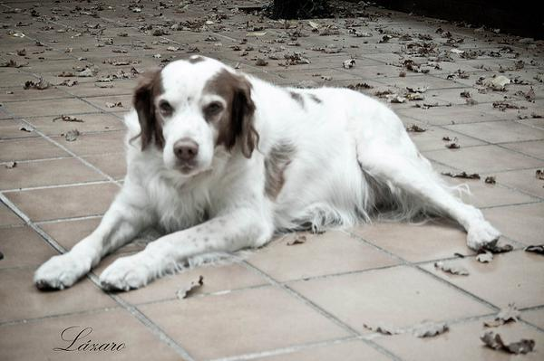 Очень старая собака