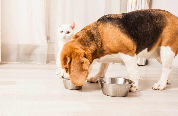 Собака ест кошкин корм