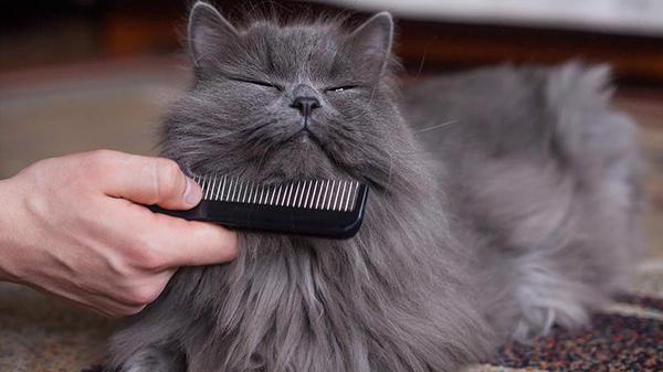 Шерсть часто выпадает у старых котов