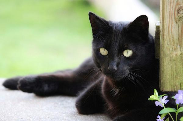 Кот сильно линяет от аллергии