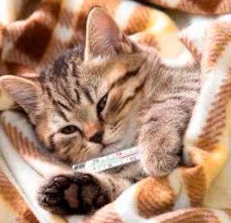кот чихает и глаза слезятся что делать