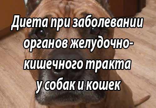 Диета собак и кошек при заболевании органов желудочно-кишечного тракта