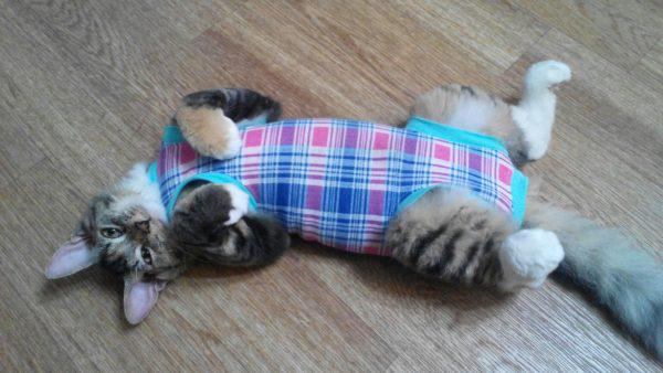 Кошка в попоне лежит на полу на спине