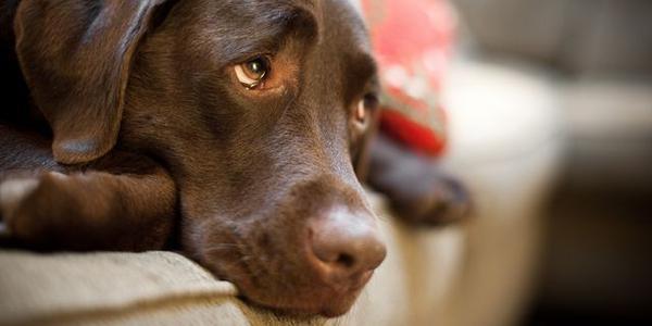 Только комплексное лечение может поставить собаку на ноги