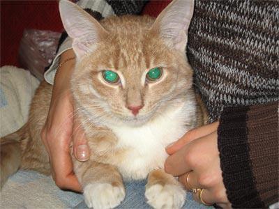 кот перед операцией фото
