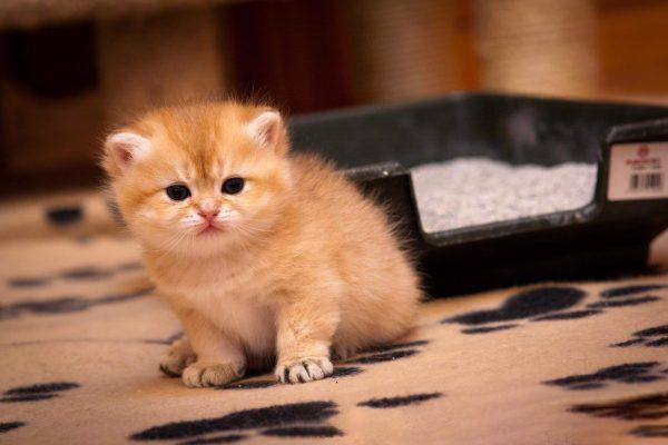 Котёнок перед лотком