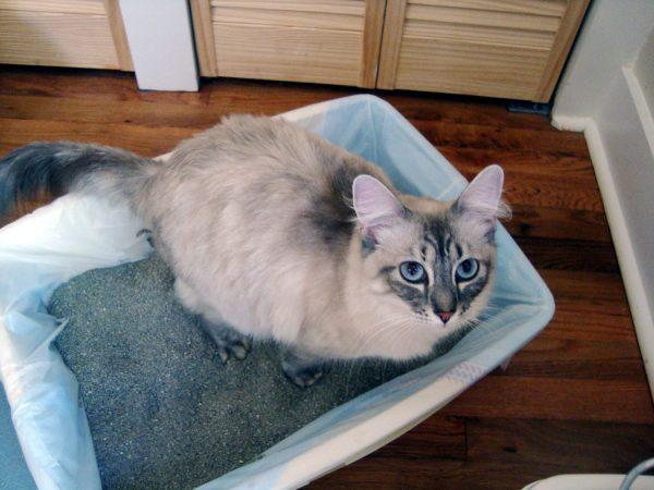 Кот в классическом лотке