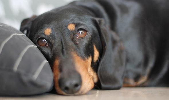 лечение энтерита у собак
