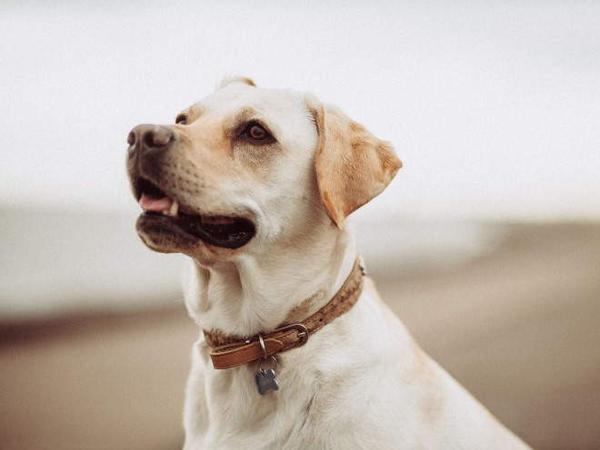 Собака на прогулке у моря