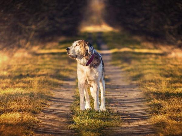 Собака идет по тропинке в лесу