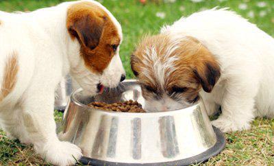 сколько еды давать щенку