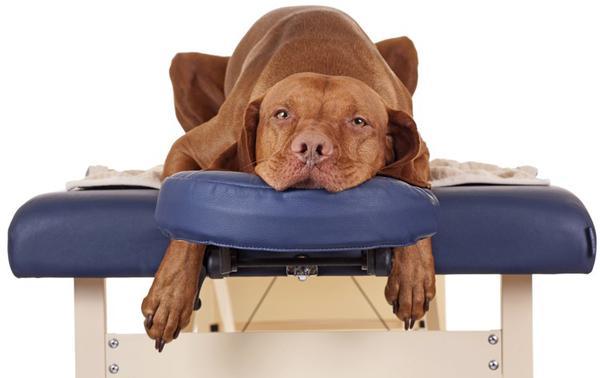 Обезболивающие препараты помогу быстро снять болевой синдром, нормализируют состояние собаки